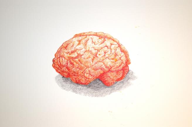 Brain, 2006